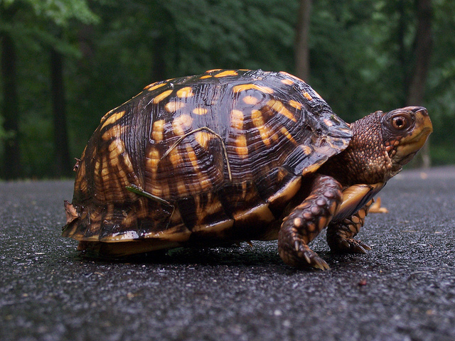 Why Slow and Steady Wins Out When it Comes to Investing